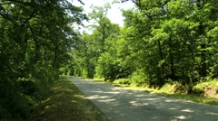 4K Road in Lush Deciduous Summer Forest 1 - stock footage