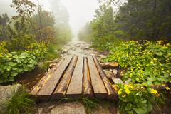 Path in the mountains in mysterious fog - stock photo