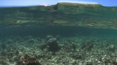 Shallow waters of a coral reef. Half-half Shot Stock Footage