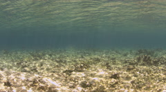 Shallow waters of a coral reef Stock Footage