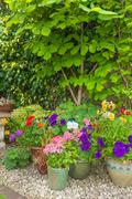 Colorful potted plants in garden corner. - stock photo