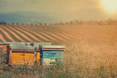Beehives on the sunflower field in Provence, France Stock Photos