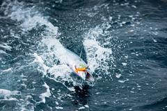 Fish on the hook in the ocean Stock Photos