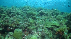 Coral reef with healthy corals and plenty fish Stock Footage