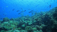 Coral reef with plenty of fish Stock Footage