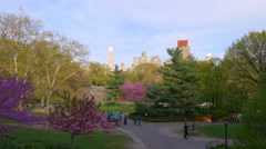 spring day light new york city central park tree blossom panorama 4k usa - stock footage