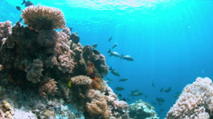Apo Reef, Coral reef in Philippines Stock Footage
