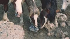 Poneys licking salt stone Stock Footage
