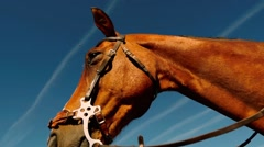 Horse head shot from below Stock Footage