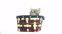 Cute baby kitten in basket on white Stock Footage