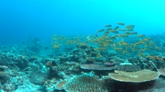 4k Coral reef with Yellowfin Goatfishes Stock Footage