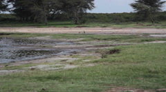 2 birds next to Kisima lake, Samburu savannah, Kenya, Africa, long shot Stock Footage