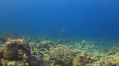 4k Turtle on a coral reef Stock Footage