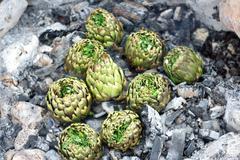 Artichokes seasoned cooked on charcoal - stock photo