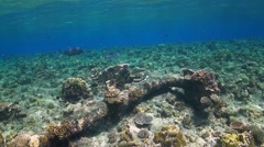 Anchor on top of a coral reef Stock Footage
