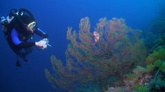 Rebreather diver on a coral reef Stock Footage