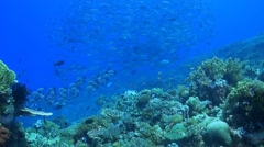 Coral reef with a school of Jacks Stock Footage