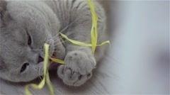 A kitten plays with yellow ribbon Stock Footage