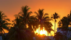 Miami beach sun down in palm tree sunset 4k florida usa Stock Footage