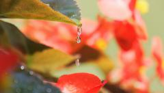 Water trickles off leaf Stock Footage