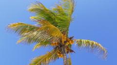 Summer day sun light blue sky miami coconut palm 4k usa Stock Footage