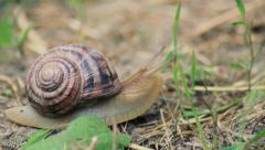 The snail creep on grass Stock Footage