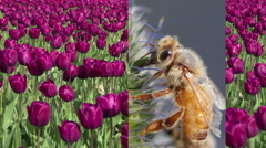 Bees, Flowers, Pollinate, Agriculture, Montage Stock Footage