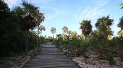 Tropical Boardwalk with Coconut Palm Trees Stock Footage