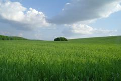 Field in a sunny day. - stock photo