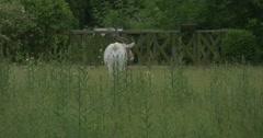 Addax, Antelope, Is Feeding, Backside Stock Footage