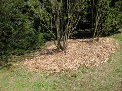 Stock Photo of Wood chips as mulch layer under the bush