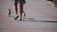 The woman walks two small dogs Stock Footage