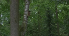 Wooden Nesting Box, Birdhouse, on The Birch in The Park Stock Footage