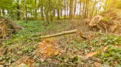 Forest - woodwork with heavy machines Stock Footage
