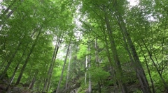 4k Green tree tops in sunny alp mountain forest Austria Stock Footage