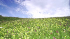 Meadow with various herbs on top of the mountain with beautiful clouds Stock Footage