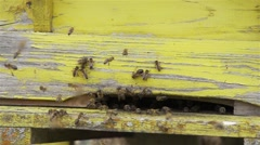 Swarm of bees flying off the entrance to the hive super slow motion Stock Footage