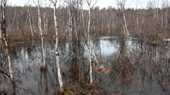 Spring flood in the forest Stock Footage