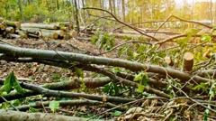 forest - woodwork with heavy machines - stock footage