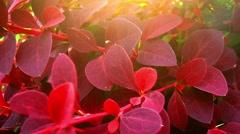 Beautiful Nature and Sunshine Stock Footage