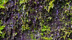 Water and Moss Stock Footage