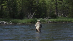 Fly fishing recreation sport Yellowstone river 4K Stock Footage