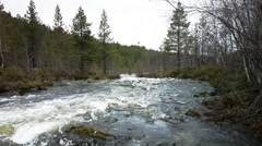 Quick taiga river on the border of Norway and Russia Stock Footage