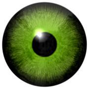 Isolated green eye illustration Stock Illustration