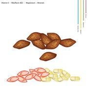 Almonds with Vitamin E, B2 and Minerals - stock illustration