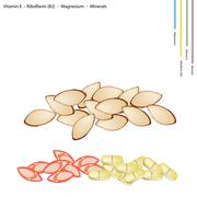 Almonds with Vitamin E, Riboflavin and Minerals - stock illustration