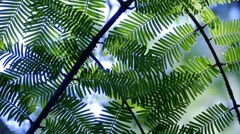 Artistic Leaves - 02 - Loop Stock Footage