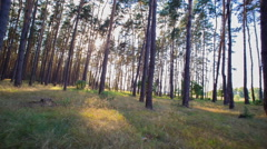 Sun Beam In Spring Forest Stock Footage