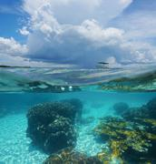 Split image coral underwater and threatening cloud - stock photo