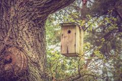 Birdhouse for birds on the tree Kuvituskuvat